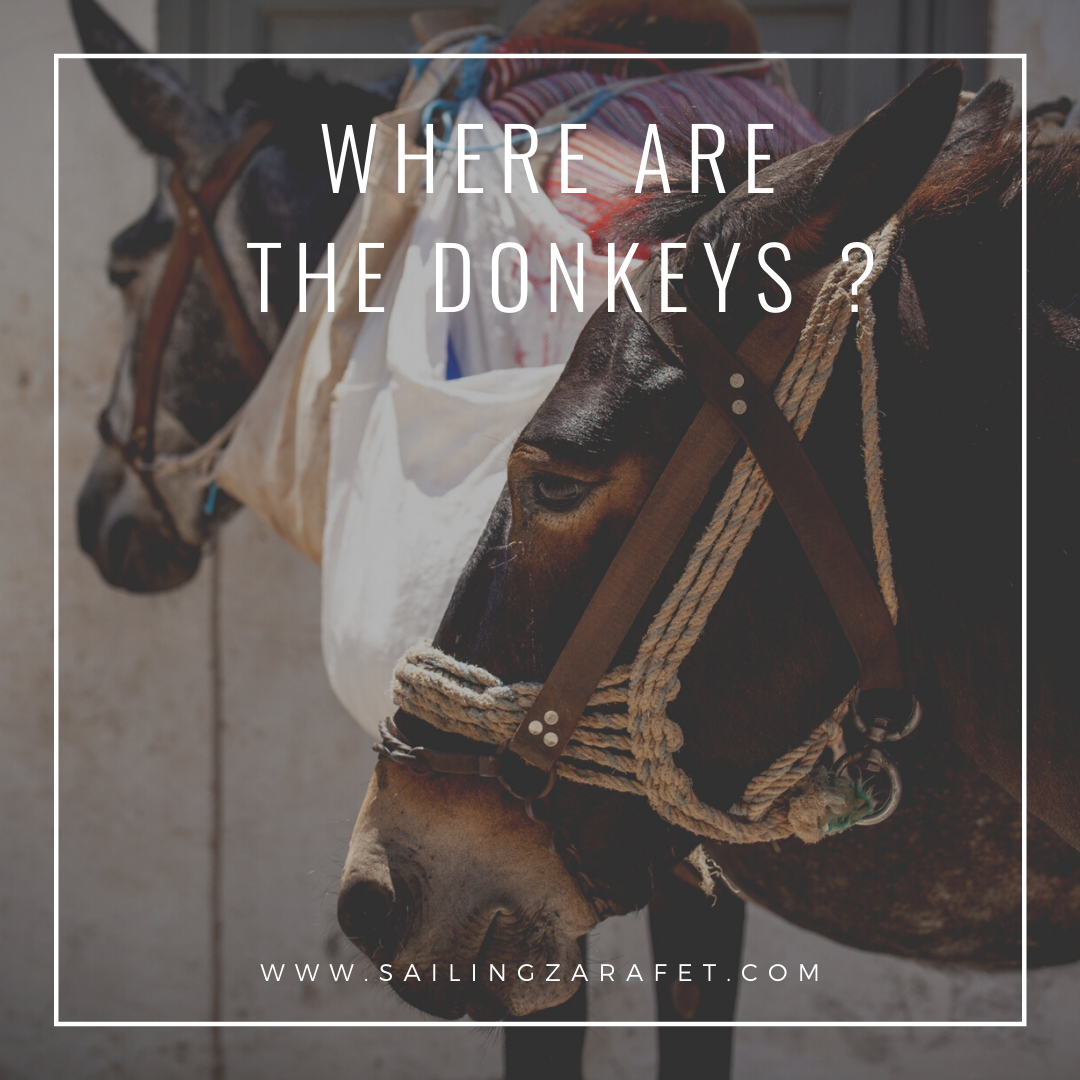 WHERE ARE THE DONKEYS